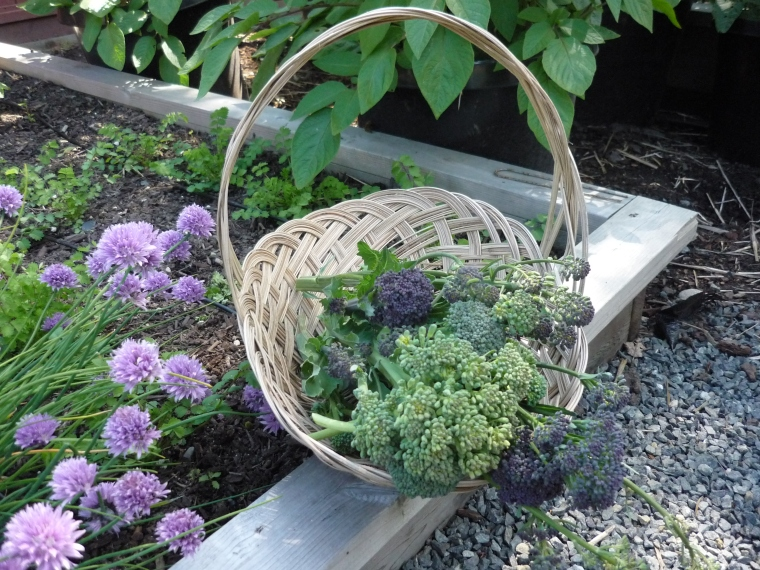 Basket of Brocolli